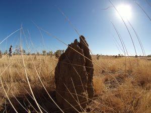 1233309_termite_mound.jpg