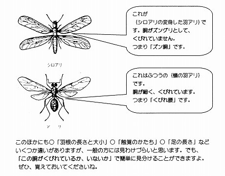 羽アリの区別 001 (2).jpg