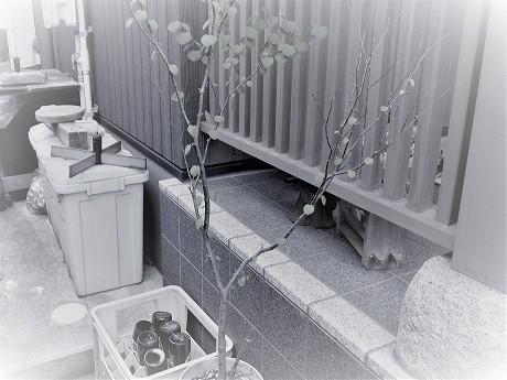 RIMG0363 - コピー (2).jpg